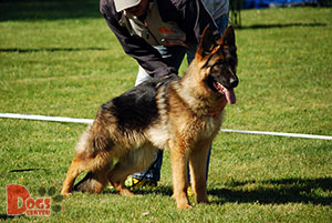Dog Training in Carlisle