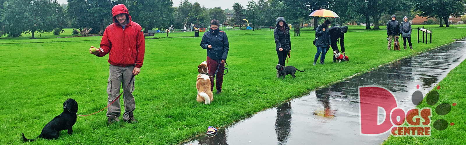 Dog Training in Chances Park (Carlisle)